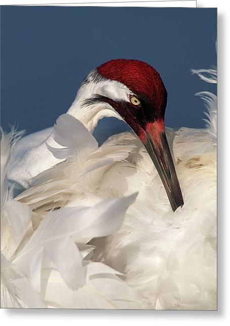 Usa, Florida, Lake Kissimmee Greeting Card