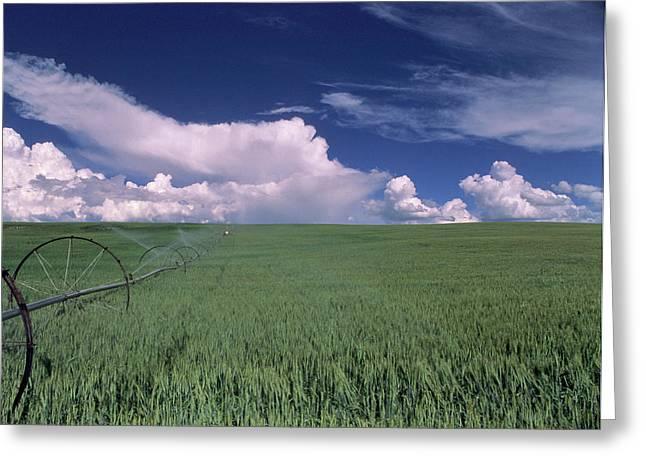 Usa, Idaho, Green Wheat Field, Clouds Greeting Card