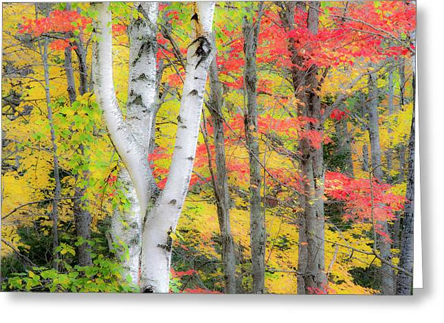 Usa, Michigan, Upper Peninsula Greeting Card