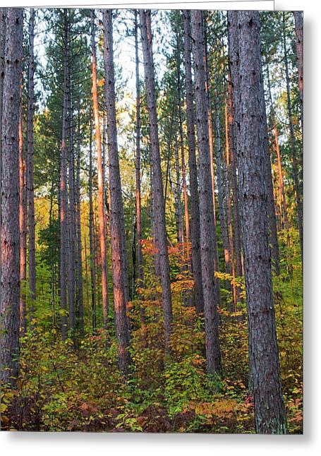 Usa, Minnesota, Lake Itasca, Itasca Greeting Card by Peter Hawkins