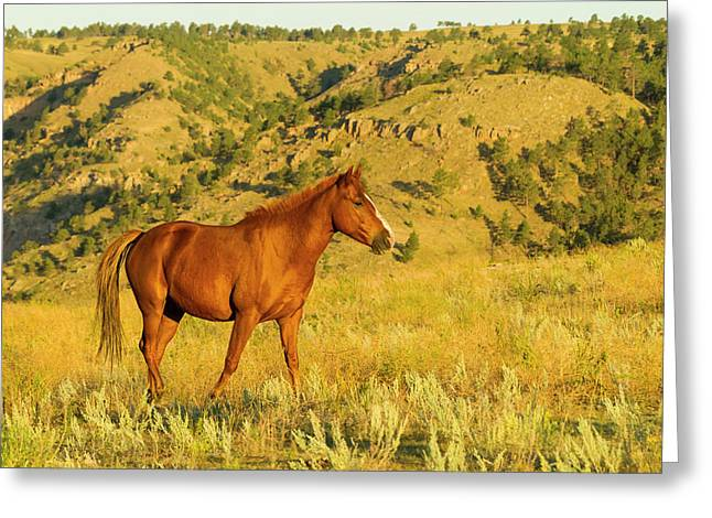 Usa, South Dakota, Wild Horse Sanctuary Greeting Card