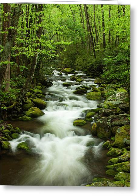 Usa, Tennessee, Stream At Roaring Fork Greeting Card by Joanne Wells