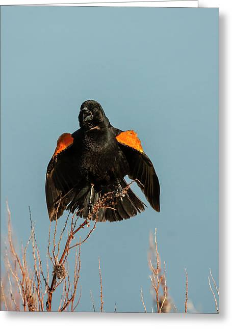 Usa, Utah, Bear River National Wildlife Greeting Card by Jaynes Gallery