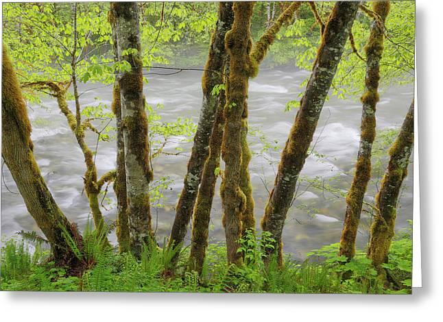 Usa, Washington, Cascade Mountains Greeting Card