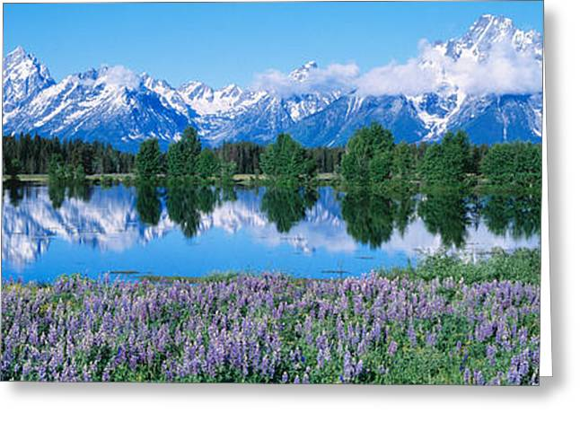 Conifer Tree Greeting Cards - Usa, Wyoming, Grand Teton Park Greeting Card by Panoramic Images