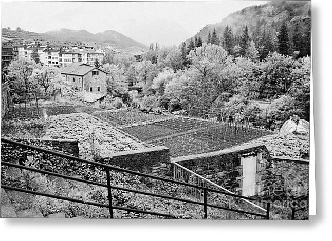 Vegetable Plots In The Old Medieval Town Of Baga Cadi Mountain Range Catalonia Spain Greeting Card