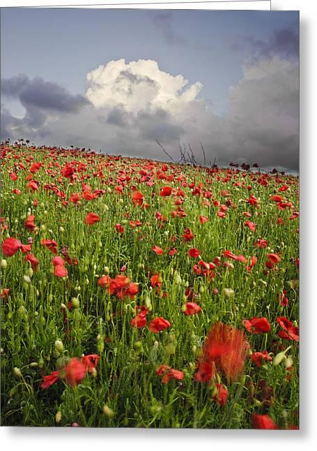 Vibrant Poppy Fields Under Moody Dramatic Sky Greeting Card