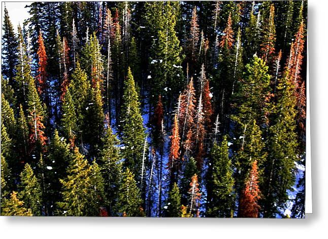 View At Beaver Creek Colorado Greeting Card by Jacqueline M Lewis
