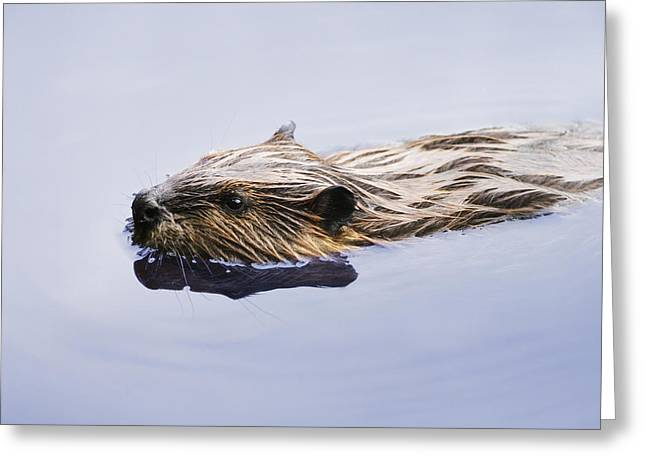 View Of Beaver, Chaudiere-appalaches Greeting Card by Yves Marcoux