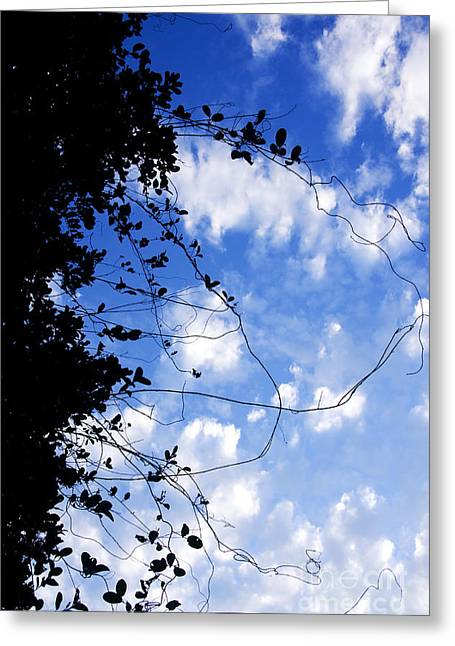 Vine-tangle Greeting Card by Jorgo Photography - Wall Art Gallery