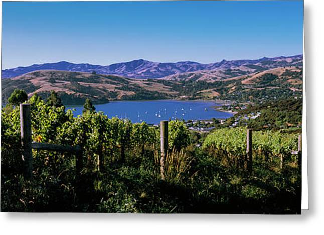 Vineyard, Akaroa Harbour, Banks Greeting Card by Panoramic Images