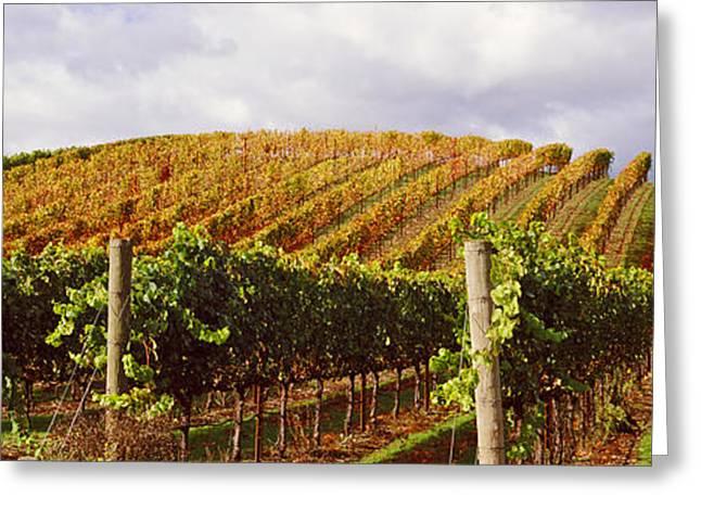 Vineyard At Napa Valley, California, Usa Greeting Card