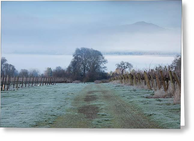 Vineyard In Winter During Fog, Ukiah Greeting Card