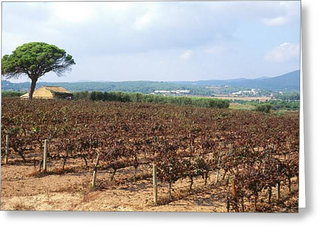 Vineyard, Sitges, Barcelona, Catalonia Greeting Card by Panoramic Images
