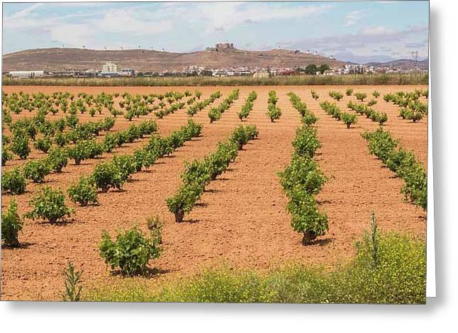 Vineyards, Consuegra, Spain Greeting Card