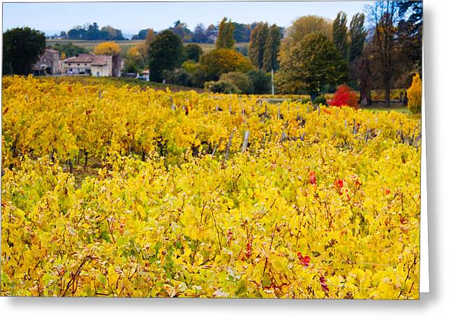 Vineyards In Autumn, Montagne, Gironde Greeting Card by Panoramic Images