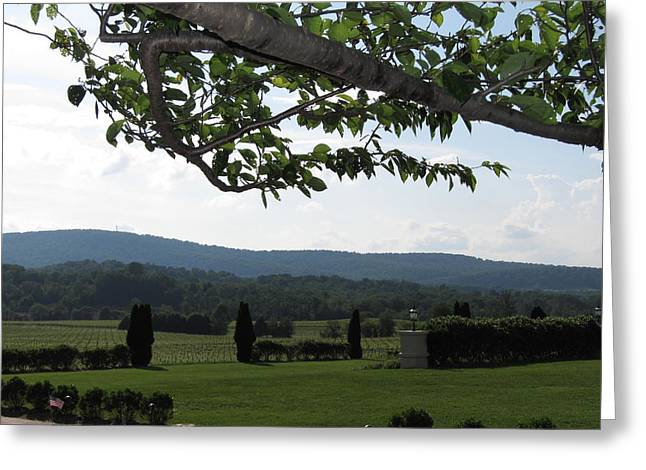 Vineyards In Va - 12125 Greeting Card