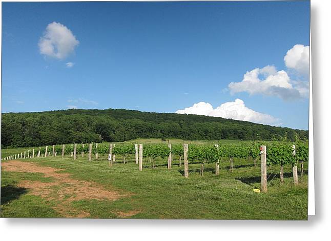 Vineyards In Va - 12127 Greeting Card by DC Photographer