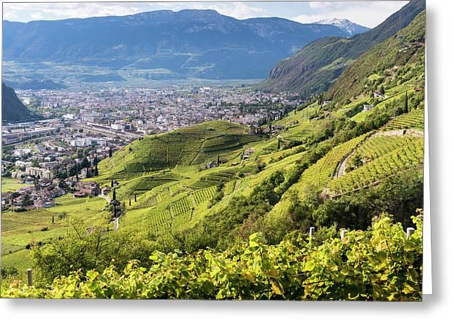 Viniculture Around Bozen (bolzano Greeting Card by Martin Zwick