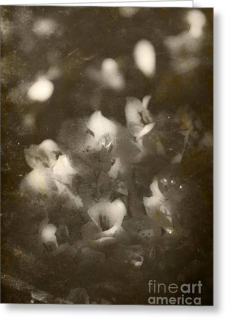 Vintage Floral Background Greeting Card by Jorgo Photography - Wall Art Gallery