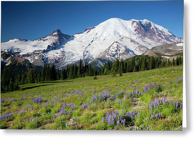Wa, Mount Rainier National Park, Mount Greeting Card by Jamie and Judy Wild