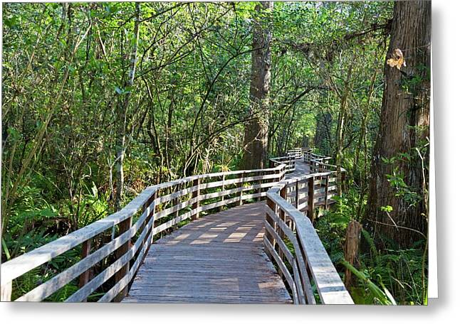 Walkway In A Nature Reserve Greeting Card by Jim West
