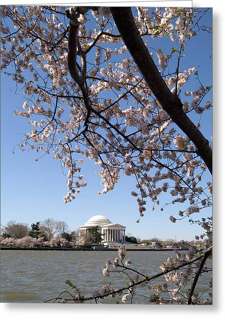 Washington, Dc, Cherry Blossom Festival Greeting Card by Lee Foster