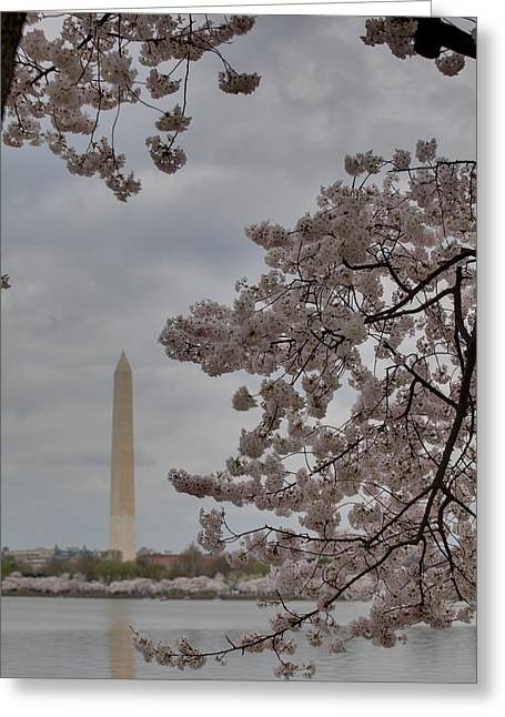 Washington Monument - Cherry Blossoms - Washington Dc - 011315 Greeting Card by DC Photographer