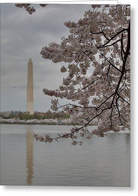 Washington Monument - Cherry Blossoms - Washington Dc - 011316 Greeting Card by DC Photographer