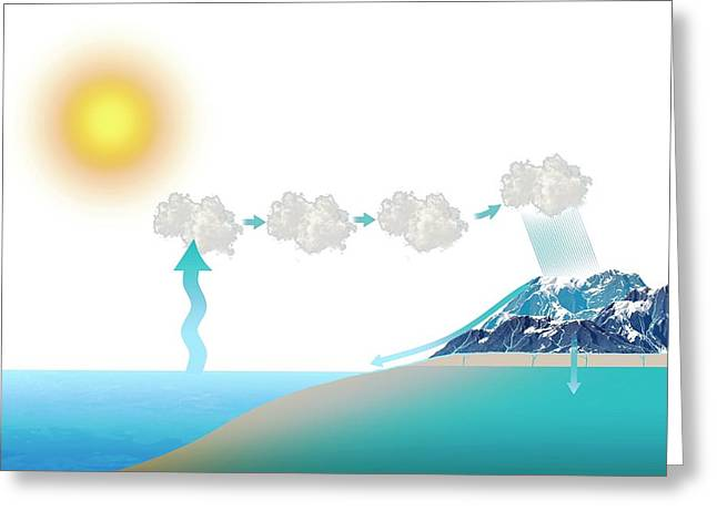Water Cycle Greeting Card by Mikkel Juul Jensen