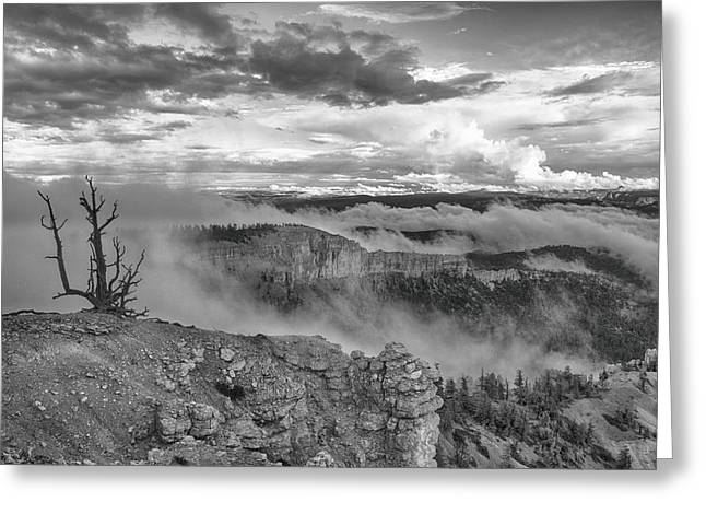 Weathered Greeting Card by Darryl Wilkinson