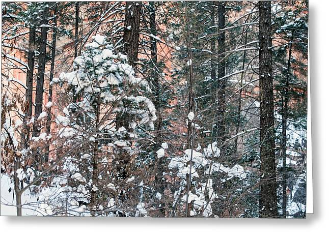 West Fork Snow Greeting Card by Tam Ryan