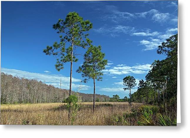 Wet Prairie Nature Reserve Greeting Card by Jim West