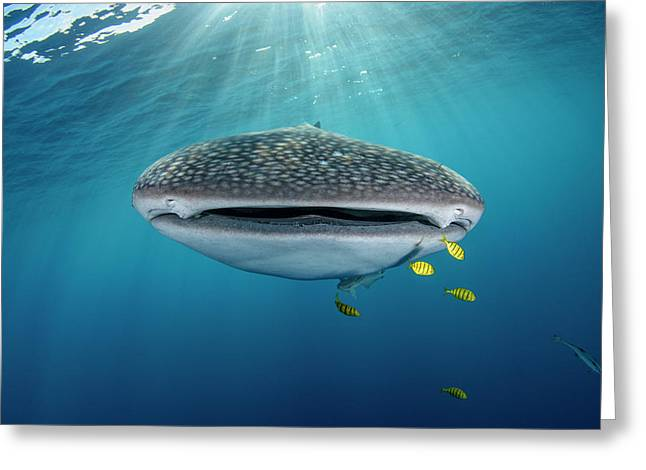 Whale Shark And Golden Trevally Greeting Card