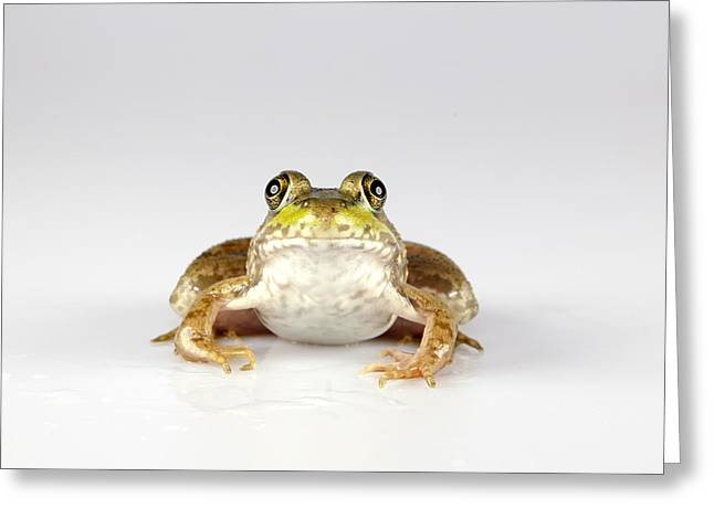 Greeting Card featuring the photograph What You Looking At? by John Crothers