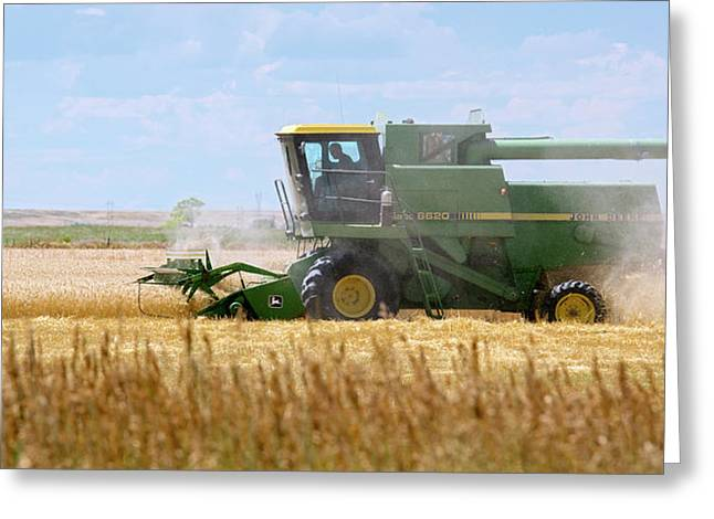 Wheat Harvest Greeting Card by Jim West