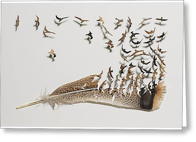 Where Feathers Come From Greeting Card by Chris Maynard