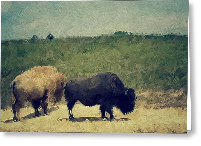 White And Black Buffalo Greeting Card by Amy Cicconi