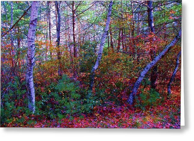 White Birch - Pocono Mountains Greeting Card