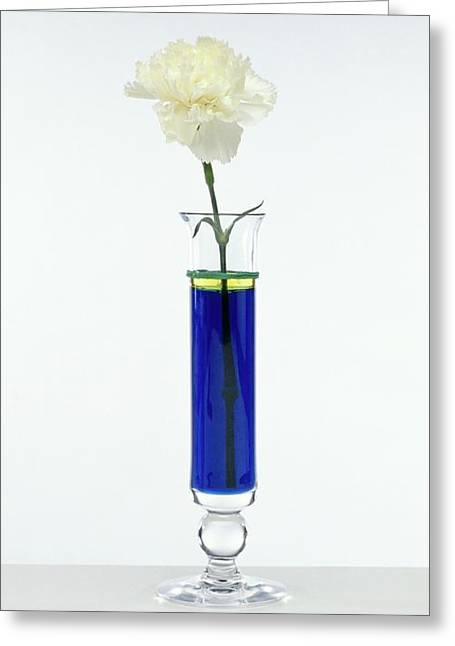 White Carnation In Vase Greeting Card by Dorling Kindersley/uig
