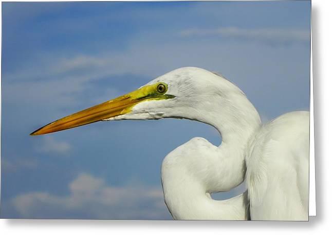White Egret Greeting Card by Carolyn Bistline