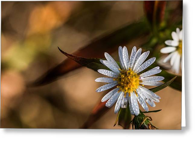 Greeting Card featuring the photograph White Flower Dew-drops Autumn by Jivko Nakev