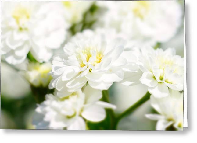 White Flower Macro Greeting Card