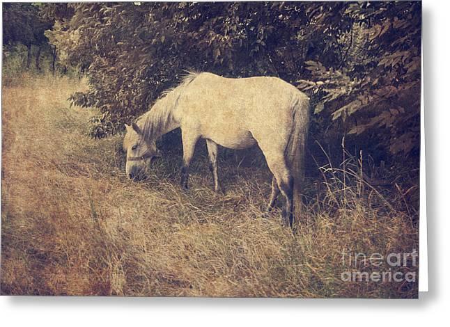 White Horse Greeting Card by Jelena Jovanovic