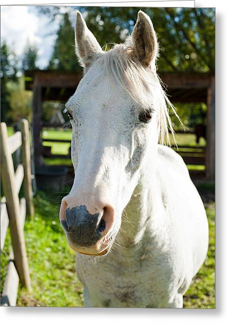 White Horse  Greeting Card by Ulrich Schade