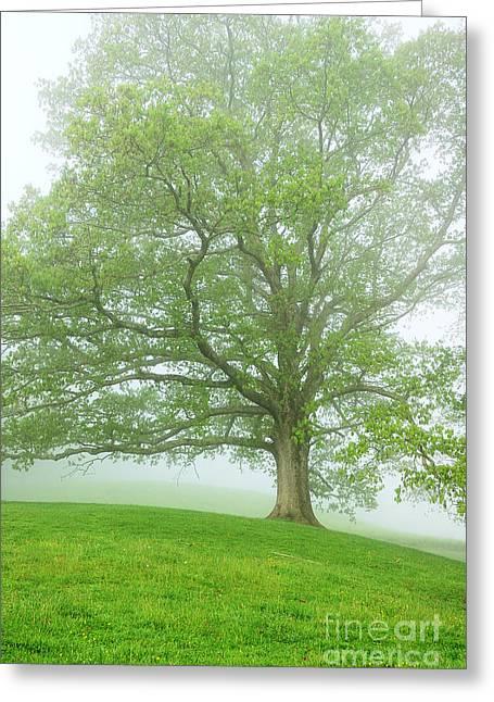 White Oak Tree In Fog Greeting Card by Thomas R Fletcher