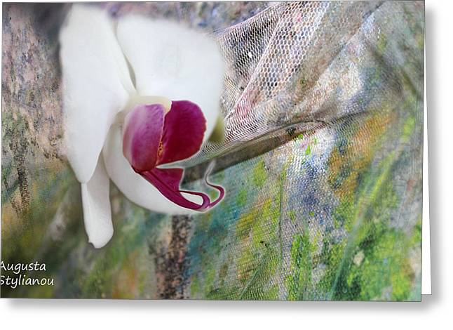 white Orchid Abstract Greeting Card by Augusta Stylianou