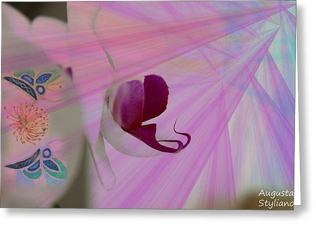 White Orchid In Rays Greeting Card by Augusta Stylianou