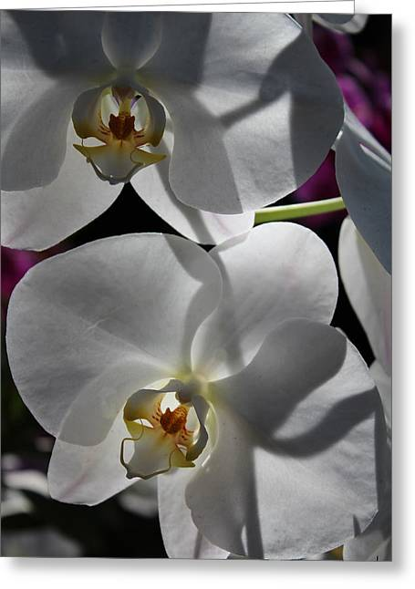 White Orchid Two Greeting Card by Mark Steven Burhart