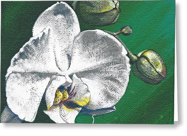 White Orchids II Greeting Card
